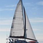 cat1 000 (Large)